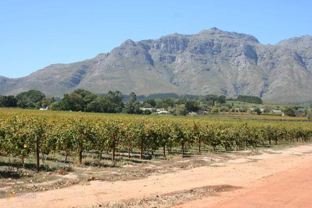 Стелленбош – #Южно_Африканская_Республика #Западно_Капская_провинция (#ZA_WC) Stellenbosch - маленький, чистенький, аккуратненький городок в ЮАР, расположенный в живописном месте и окруженный со всех сторон виноградниками и полями для гольфа. Своеобразный островок Европы или Калифорнии (долина Напа, пожалуй, будет максимально близко) посреди Африки! http://ru.esosedi.org/ZA/WC/1000079903/stellenbosh/