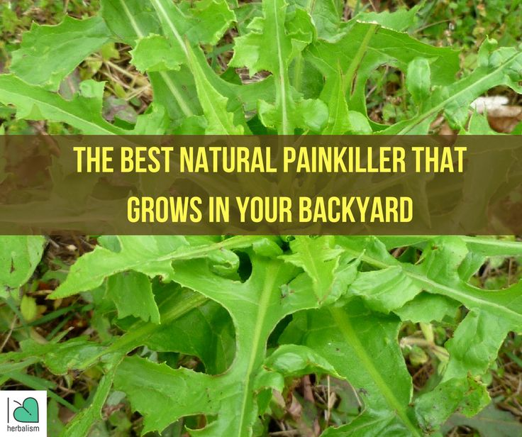 Http Www Corespirit Com Strong Morphine Natural Painkiller Grows Backyard