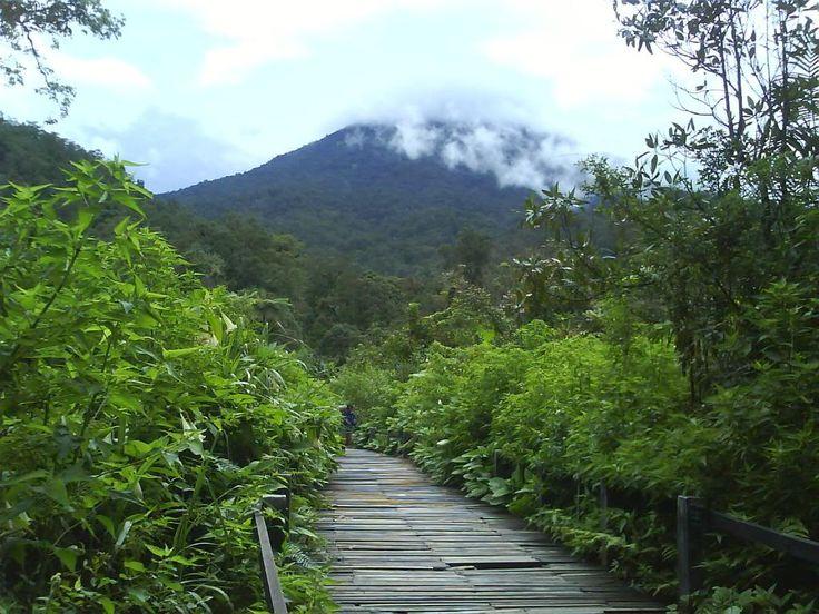 sawah gede pangrango national park - Google zoeken