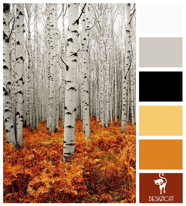 Bare Trees: Black, Grey, White, Gold, Orange, Terracotta, Brown - Colour Inspiration Pallet