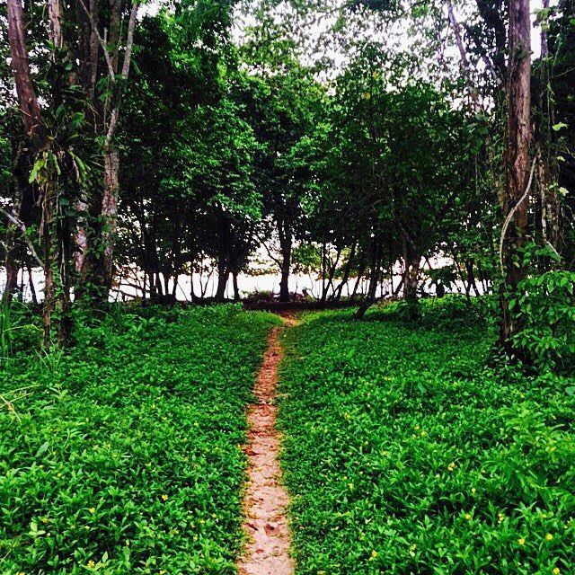 """""""#Green is the prime #color of the #world."""" Take a #vacation to #BubbasHouse #explore the #jungle and #discover #Wizard #Beach on #Bastimentos #Island.  #Paradise is waiting for you #BocasDelToro #Panama."""