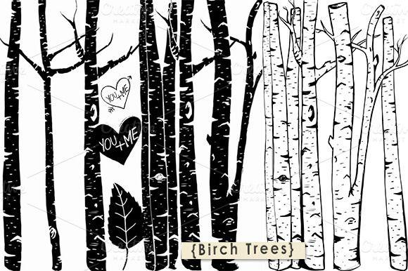 Birch Tree ClipArt - Photoshop Brush by FishScraps on Creative Market