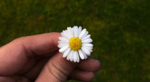 flor gira