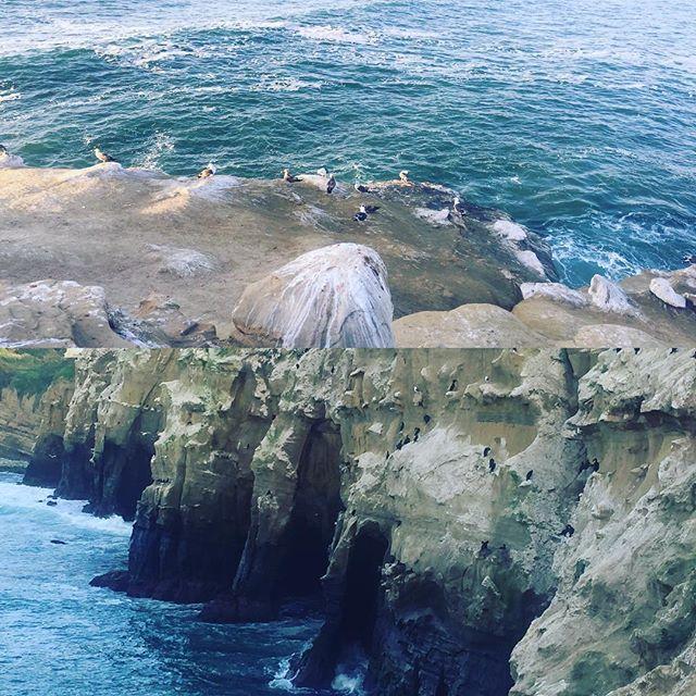 アザラシがいっぱい生息しているラホラビーチにルンルンで行ってきました♡ 駐車場に着いた時点で水族館的な匂いが辺りに充満していて…♡笑 期待して行ったら、全くアザラシが居ないではありませんか…😓 結局匂いの正体は大量の鳥の糞でした OMG!! Where is seal?? #アザラシ #lajolla  #sandiego #sea #アザラシどこよ #アザラシいっぱい居るはずやのに #アザラシの近くで写真撮りたかった #アザラシ飼いたい  #アザラシの恨みは忘れない #アザラシも実は鬱陶しいから違う場所に行ったんかも… #lajollalocals #sandiegoconnection #sdlocals #sandiegolocals - posted by metabolic toshi-kun  https://www.instagram.com/okumuratoshiyuki. See more post on La Jolla at http://LaJollaLocals.com