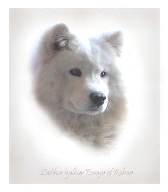 Computer Canines on Etsy. Personalized dog portraits. White dog on white background £20. www.computercanines@etsy.com