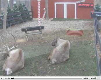 Santa's Live Reindeer Cam