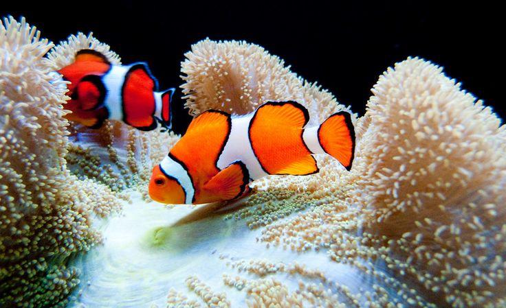 Seattle Aquarium Tropiske fisk