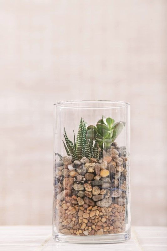 Decorate your home with a pebble terrarium garden. Without any soil, these succulent terrariums are a bright addition to any space and can be adapted to your own style by using your favorite stones and glass container. Click in to learn more from Garden Therapy.