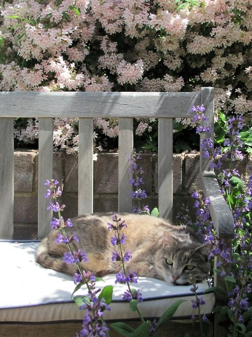 "Kitty in the ""Cosy"" Garden  ~  mostlycatsmostly:  (by tranquil townhouse)"