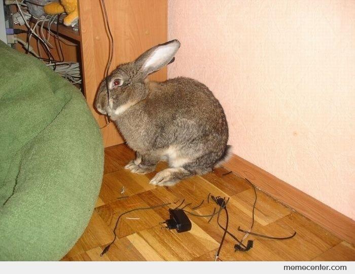 Rabbit Computer Meme   Never leave your rabbit unattended by ben - Meme Center