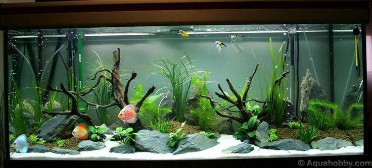fish tank ideas | Fish Tank of August '10 at The Age of Aquariums - Tropical Fish #TropicalFishAquariumIdeas