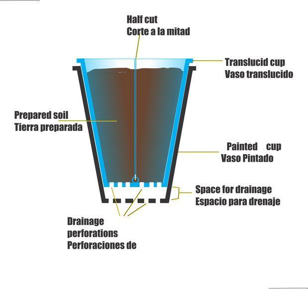 Recycled plastic cup pots ( macetas reciclando vasos descartables )
