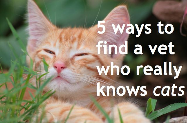 '5 ways to find a vet who really knows cats (it could save your cat's life) (17 Jul '12).' Need a vet who has a better understanding of feline needs? Here are five tips to help you find one.    And here's a sixth tip: Ask how the vet stands on raw feeding. If they recommend and sell prescription diets and caution against raw, keep looking!