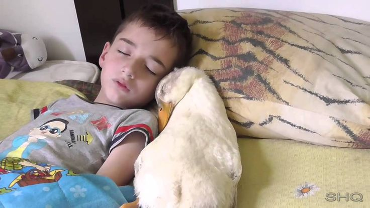 Duck / Nikita / child sleeping