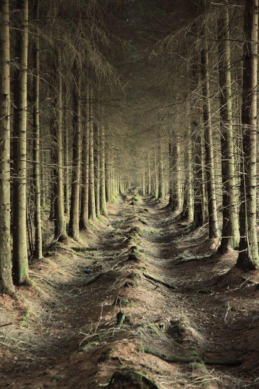 Spooky Woods 2    Longridge Fell, Lancashire, England