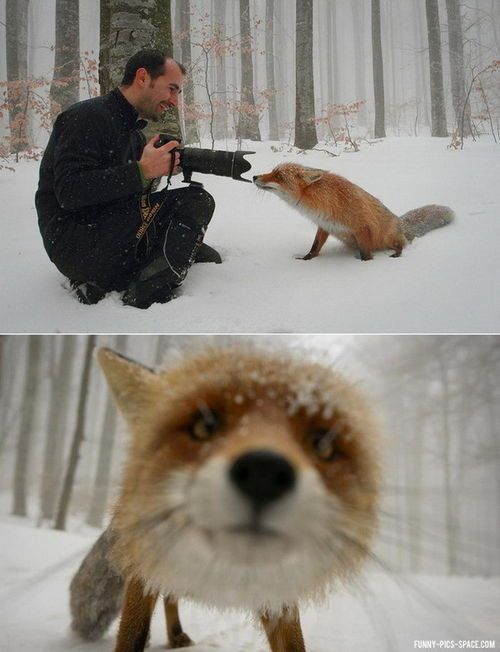 Fox.. I seriously love this.