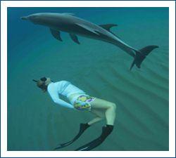 The Dolphin Centre, Mozambique