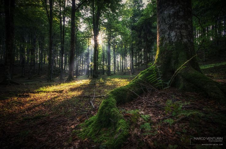 Woods #2 by Marco Venturin on 500px