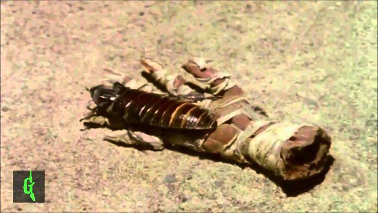 El regreso de la momia - Escalofrios latino