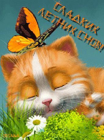 Анимация Котенок спит на поляне на фоне ромашки и бабочки / Сладких летних снов / Орсана/ (© qalina), добавлено: 12.08.2015 20:46