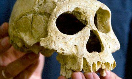 Arqueólogos desenterraram o que pode ser a mais antiga evidência de caça e limpeza de carne de antigos ancestrais humanos.