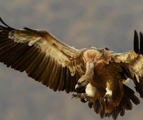 Hunting in Romania