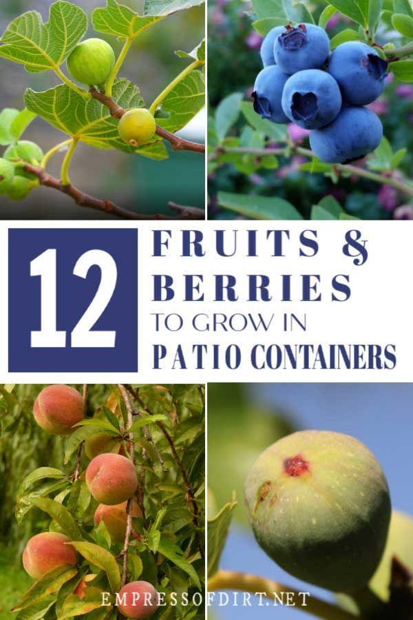 12 Best Fruits And Berries For Patio Containers Container