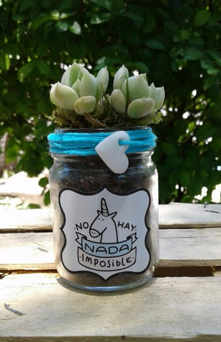 Frascos reciclados , reutilizados como macetas, vienen perforados para su correcta función. Con bellas plantitas suculentas o cactus.