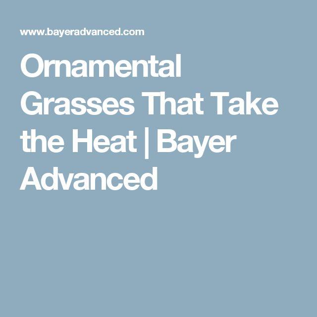Ornamental Grasses That Take the Heat   Bayer Advanced