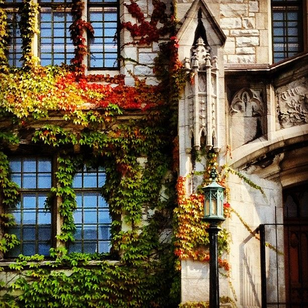 Fall is here! #ivy #leaves #red #queensu @ Douglas Library, Queen's University Photo by sarahronnie