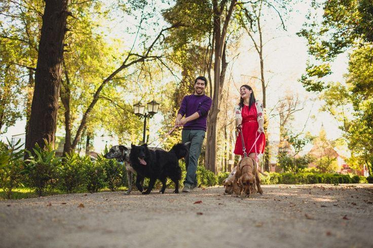 Preboda novios en Parque, Parque Nuestra señora de Gabriela, fotógrafo matrimonio Santiago, Fotógrafo matrimonio Viña, fotógrafo matrimonio Concepción, novios paseando a sus perros