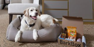 Best Pet Friendly Hotels In New York City - Hotels That Allow Dogs In New York City