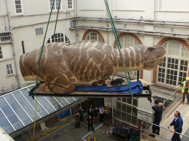 T.Rex - the Killer Question exhibition. T.Rex making his way into BMAG!