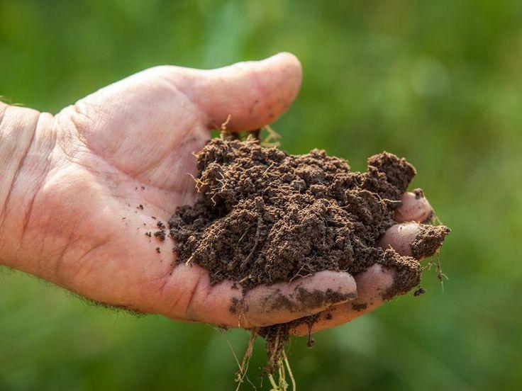 Agricoltura biologica: ottavo anno di crescita ininterrotta