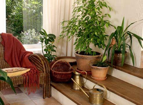 Как содержать комнатные растения зимой