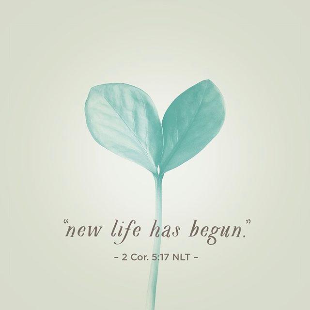 This means that anyone who belongs to Christ has become a new person. The old life is gone; a new life has begun! – 2 Corinthians 5:17 NLT #Scripture #Bible #BibleVerse #GodsWord #FCinspiration #NewLife