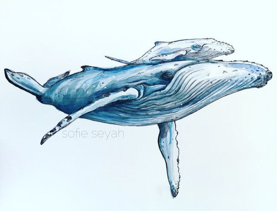 Humpback Whale and Calf - Watercolour and Ink Nautical Illustration - Nursery…
