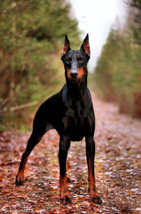 INCREÍBLE: Las 15 razas de perros más inteligentes.