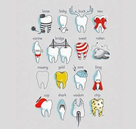 Dental charting