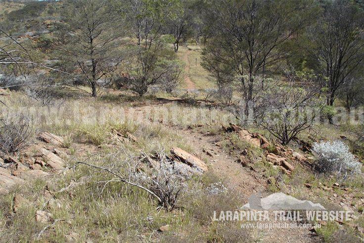 Track Cam: Typical trail surroundings along Section 1, Larapinta Trail. © Explorers Australia Pty Ltd 2013
