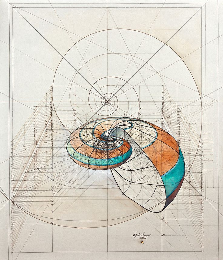 Nautilus print -- this image was drawn by hand, using formulas, rulers and protractors to create the shell shape.
