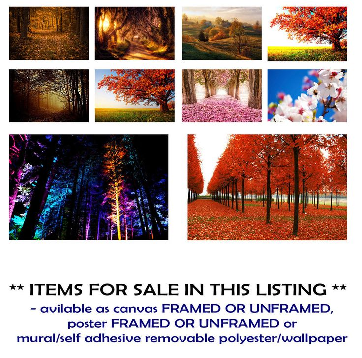 FOREST AUTUMN, MAGIC,MISTY, RED,ART CANVAS PRINTS FRAMED/UNFRAMED,POSTERS,MURALS
