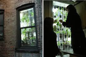 Groenten in potten + guerrilla gardening in huis