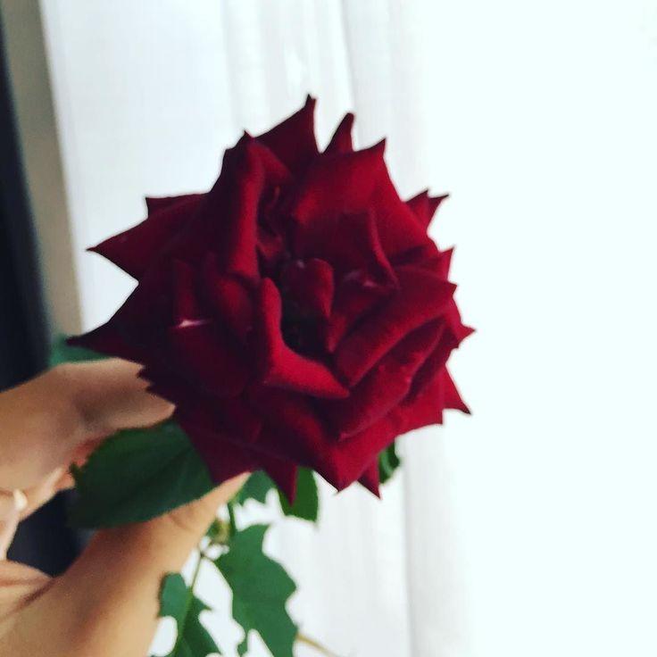 """#ElisaDOspina Elisa D'Ospina: """"Da quando sei arrivata tu il giardino ha iniziato a fiorire"""" il gentile omaggio del portiere del palazzo"""