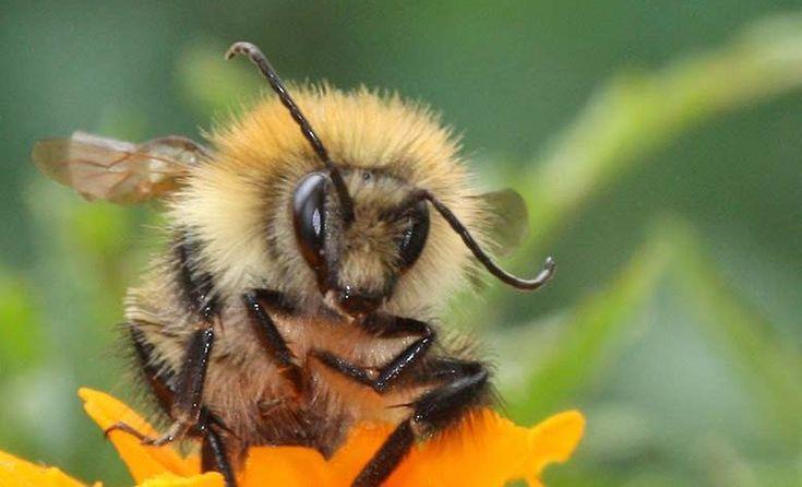 75 % du miel vendu contient des pesticides dangereux pour les abeilles 🐝   https://mrmondialisation.org/75-du-miel-vendu-contient-des-pesticides/?utm_content=buffer7f04e&utm_medium=social&utm_source=pinterest.com&utm_campaign=buffer