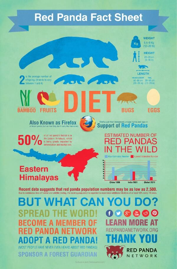 A beautiful potpourri of Red Panda facts!