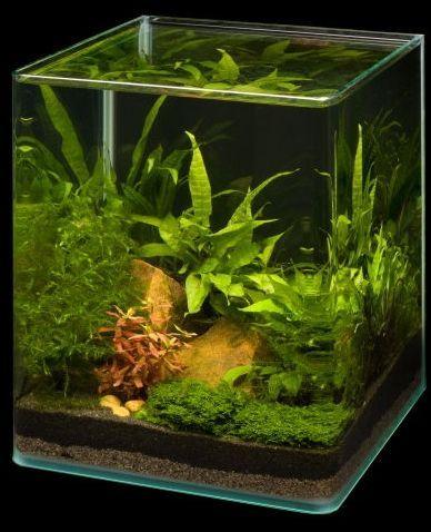 25 beste idee n over 20l aquarium op pinterest aqua for Plante nano aquarium