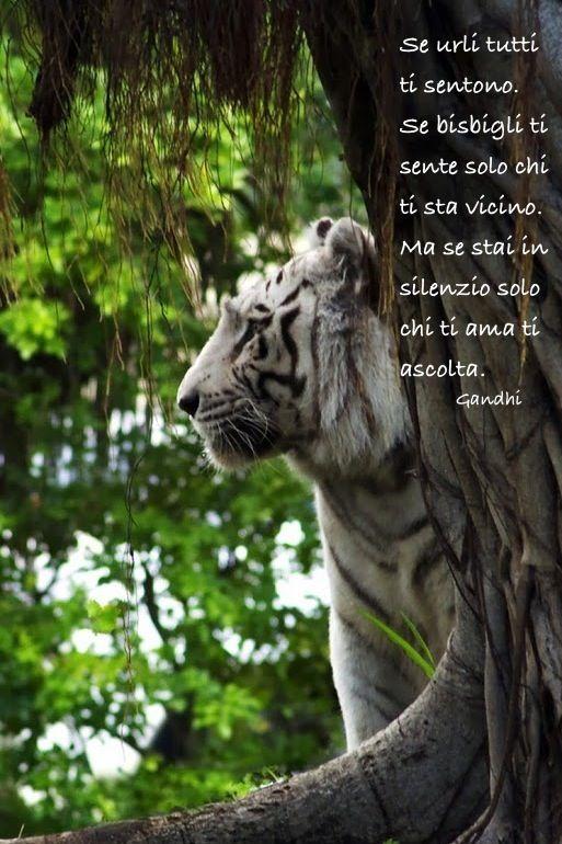 tigre.jpg (513×770)