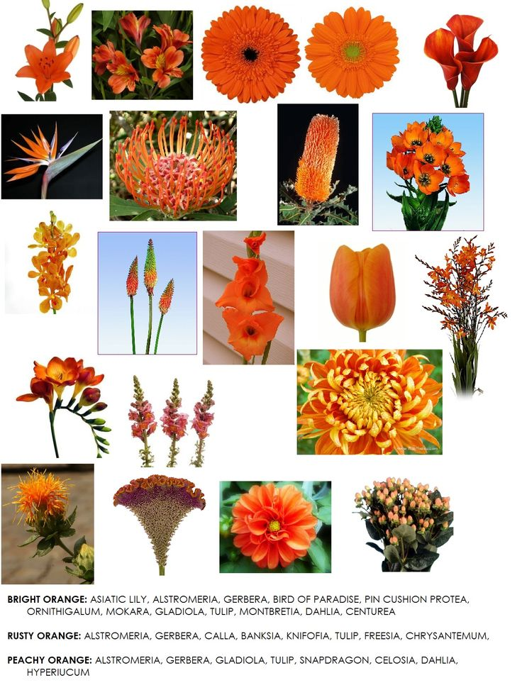 Find This Pin And More On Flower Types