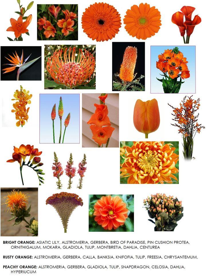 best 25 gardening-flowers-orange images on pinterest | gardening